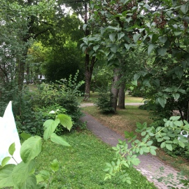 Fußweg zum Garten
